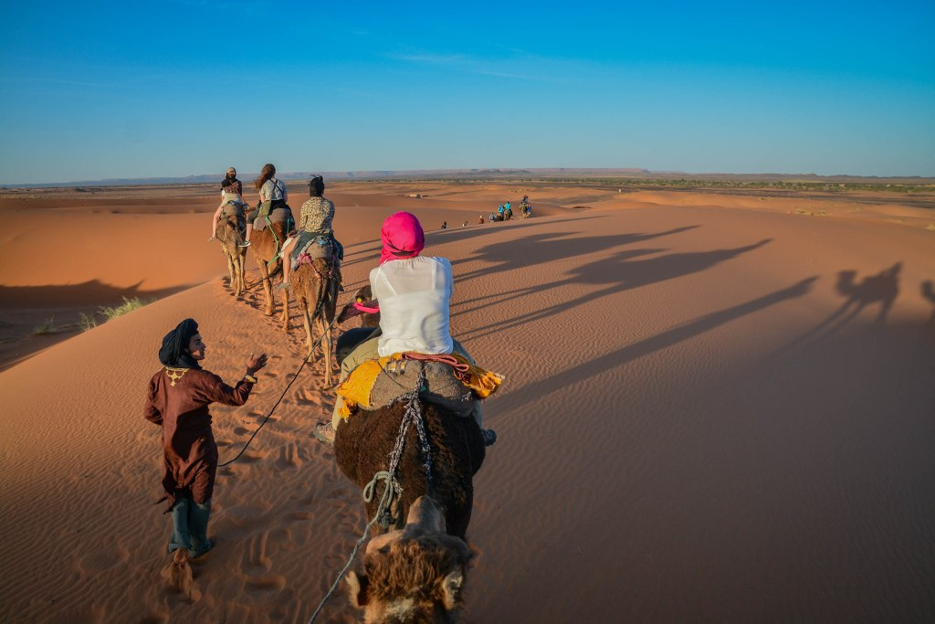 A guide leading a caravan of five camels in a line through the desert with the sun setting on the sand and casting long shadows under a blue sky and distant horizon.